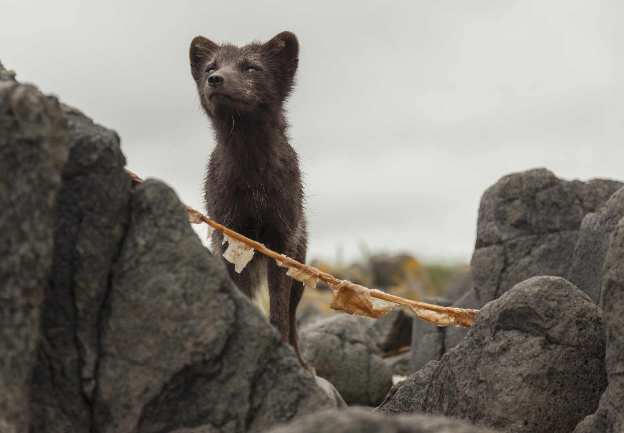 3 марта весь мир отмечает день охраны дикой природы