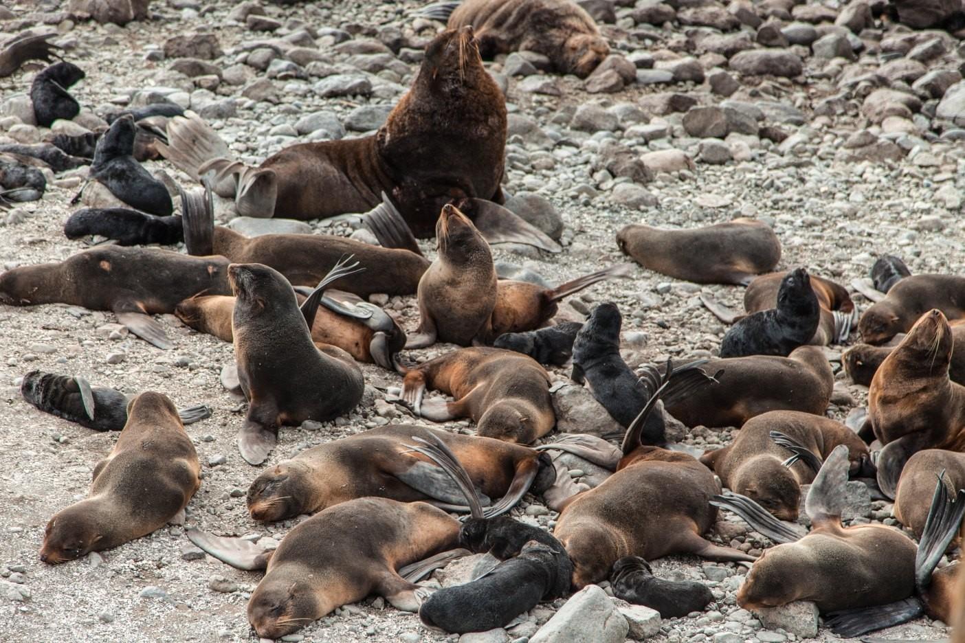 Морские животные Командорских островов